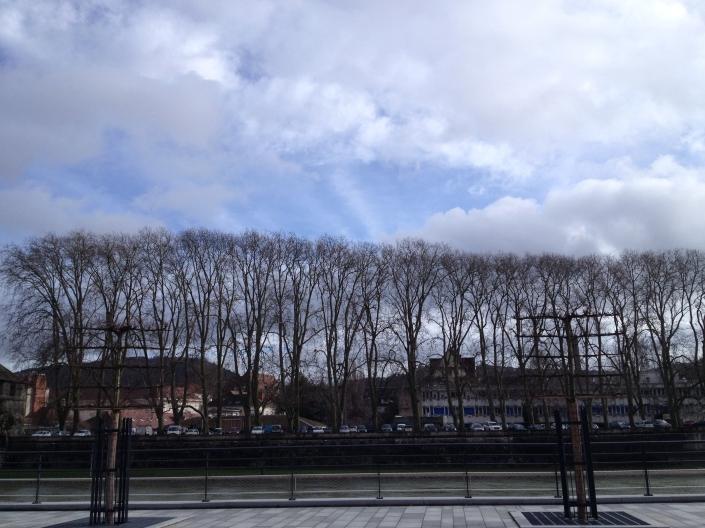 Árvores secas e a típica paisagem de inverno